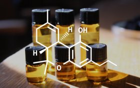 What is Tetrahydrocannabivarin (THCV)?