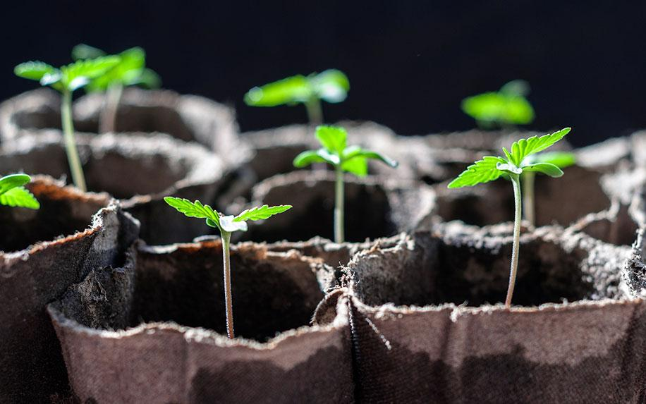 Where Can You Grow Your Own Medical Cannabis?